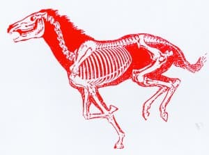 redhorse1